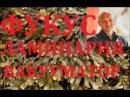 Приготовление фукуса ламинарии Вакууматор Молекулярная кухня Павел Ян