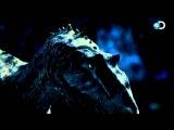 Dinosaur Revolution - Sleep Deprived