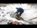 Охота на кабана Зима 2018