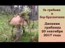 За грибами в бор-брусничник. Дневник грибника 20 сентября 2017 года
