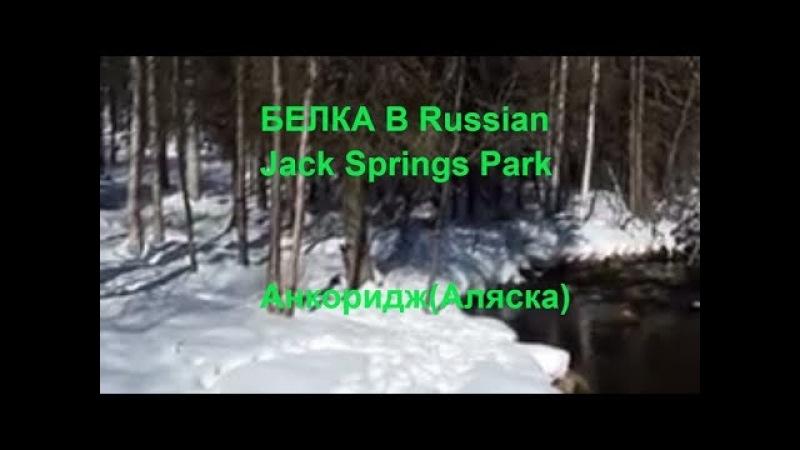 Russian Jack Springs Park - Анкоридж (Аляска)