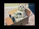 Смешные котики Кот и коробка 2018
