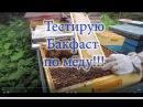 1 Часть. Как сработал Бакфаст на мёд и какова его сила на конец ГМ , при аномальной весне.
