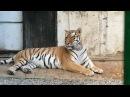 Danisso Travel on Instagram Большой Алматинский зоопарк Амурский тигр Тур поездка в Алматы 5 ноября Стоимость поездки 1500 сом алмата тигр