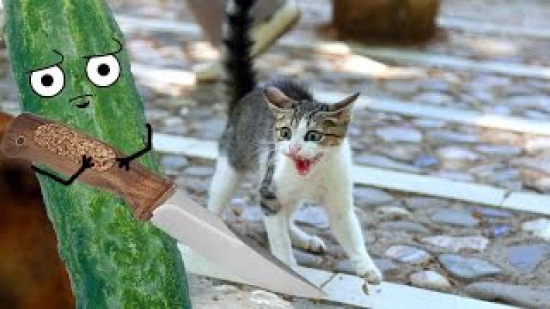 Cats vs cucumbers   Compilation   Коты против огурцов   Подборка