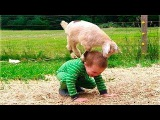 FUNNY Animals Trolling Babies and Kid #5  Funny Babies and Pets Compilation