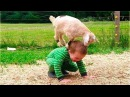 FUNNY Animals Trolling Babies and Kid 5 Funny Babies and Pets Compilation