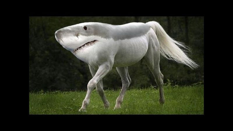 Top 10 Most Amazing Hybrid Animals You Wont Believe Actually Exist