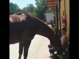 Вредная лошадка ??