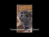 #Кот говорит: