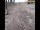 Каждый день петух бежит к школьному автобусу, чтобы поприветствовать своего лучшего друга ! .....