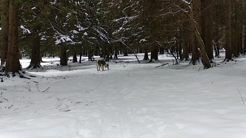 Юкон в лесу