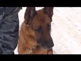 Собака по кличке Граф помогла раскрыть кражу по горячим следам-Рен