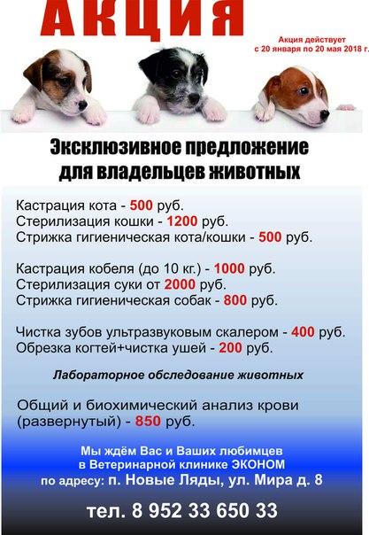 Ветеринарная клиника новые ляды