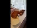 Кот спасает товарища от ветеринара