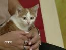 Знакомство с питомцами котёнок Флиппер ищет хозяев