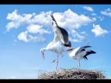 Самые странные в мире животные (В небе)