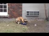 Rex The Dog #coubГордись, брат