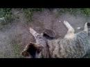 Смешные ёжики и кошки вместе играют