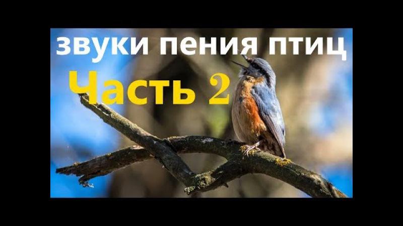 (Часть 2) Настоящие Звуки природы Живой лес Пение птиц, для релаксации, сна, Медит ...