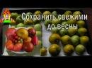 Хранение помидоров Как сохранить помидоры свежими на зиму