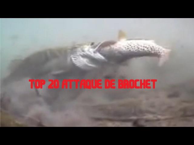 TOP 20 ATTAQUES DE BROCHET SPECTACULAIRE