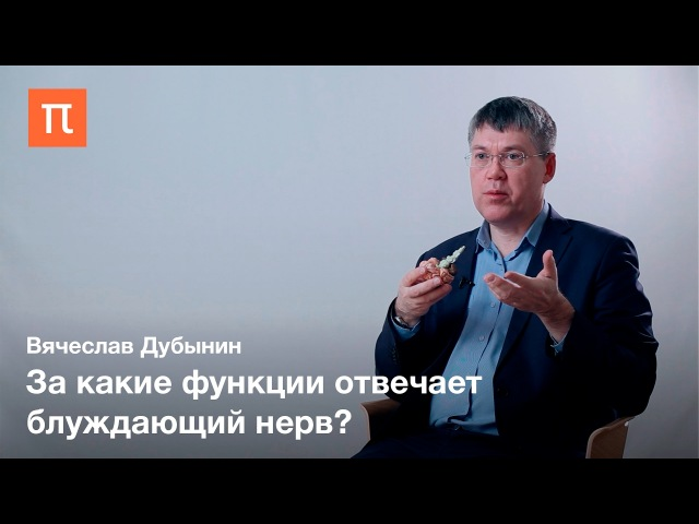 Вячеслав Дубынин — Продолговатый мозг и мост dzxtckfd le,syby — ghjljkujdfnsb̆ vjpu b vjcn