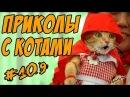 Смешные кошки и коты приколы про кошек и котов Кошки видео ТОП подборка 2018 Funny cats 2018