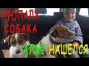 Пропала собака Альф нашелся Беременную Рокси везем в клинику на УЗИ Будут щенки