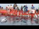 Câu Giải Trí Vô Tình Câu Được Cá Khổng Lồ   Amazing - Fisherman Sort Their Big Net Catch Kona Fish
