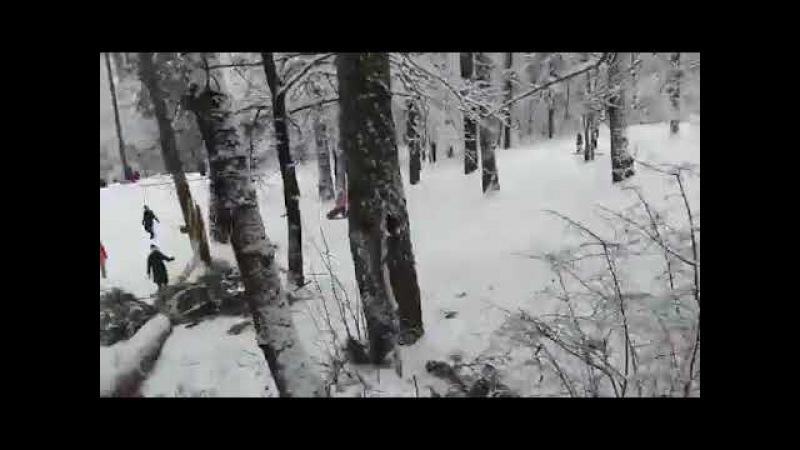 Дерево упало на глазах у людей в Калуге