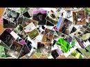 Pets Denis Zharkov Воспитанники Дениса стаффордширские бультерьеры, собаки - компаньоны