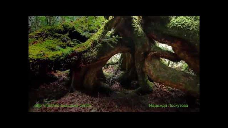Нежная, лечебная музыка успокоит нервную систему, а красивое видео для Души. » Freewka.com - Смотреть онлайн в хорощем качестве