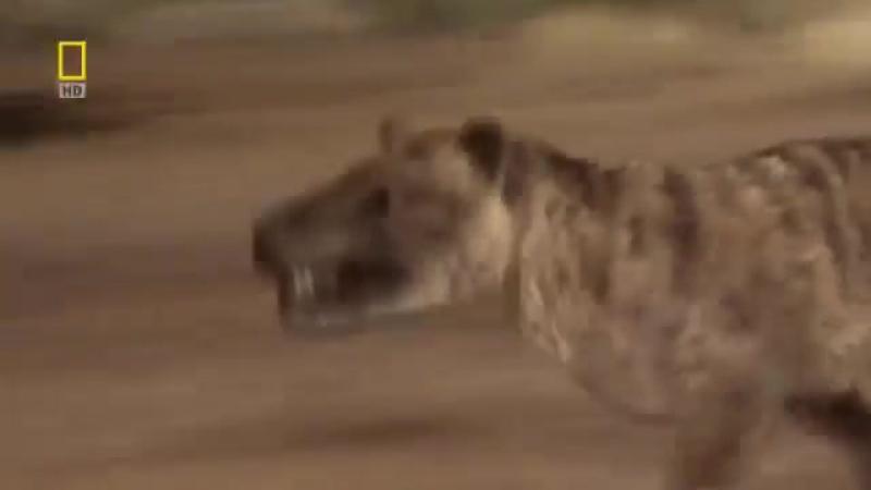 Доисторические хищники — Челюсти как бритва Документальные фильмы, передачи HD
