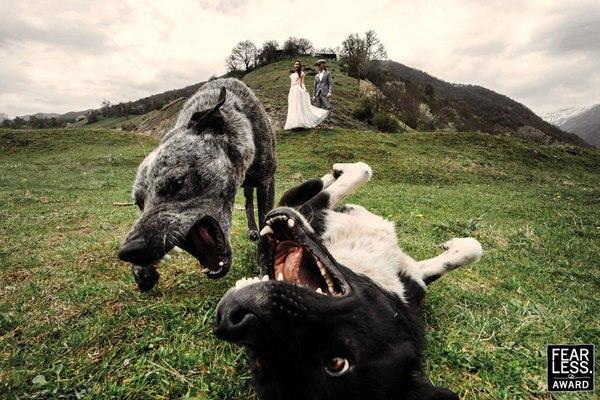 YWmlin5ckXs - Эксклюзивные свадебные фотографии от Бесстрашных фотографов