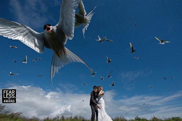 UI QDD0MpdU - Эксклюзивные свадебные фотографии от Бесстрашных фотографов
