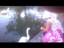 Лебединое озеро в Новом Афоне