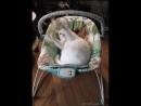 Кот играет в детском шезлонге