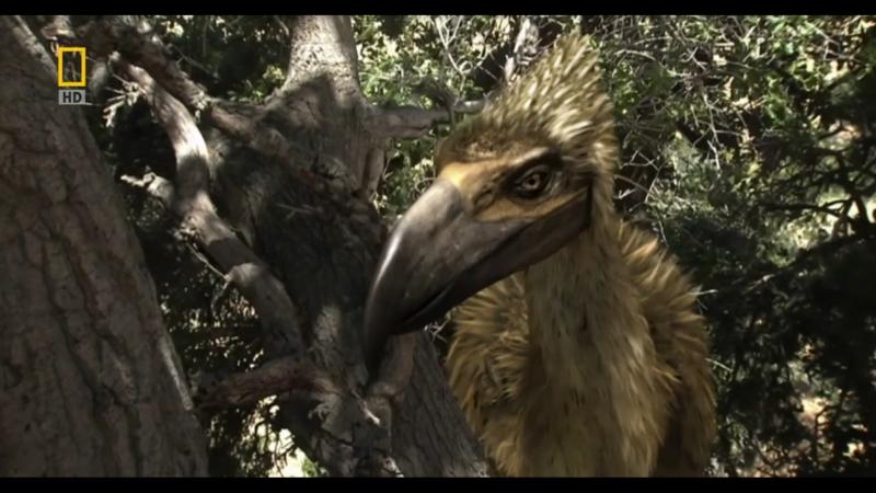 Доисторические хищники/Prehistoric Predators. Хищные птицы-ящеры/Terror Raptor