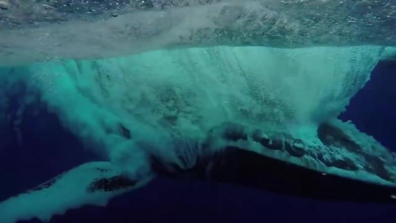 Горбатый кит взлетает