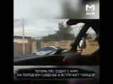Дальнобойщик научил свою собаку ненавидеть полицейских