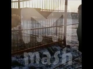 В приморском зоопарке четверо посетителей оплевали и избили животных
