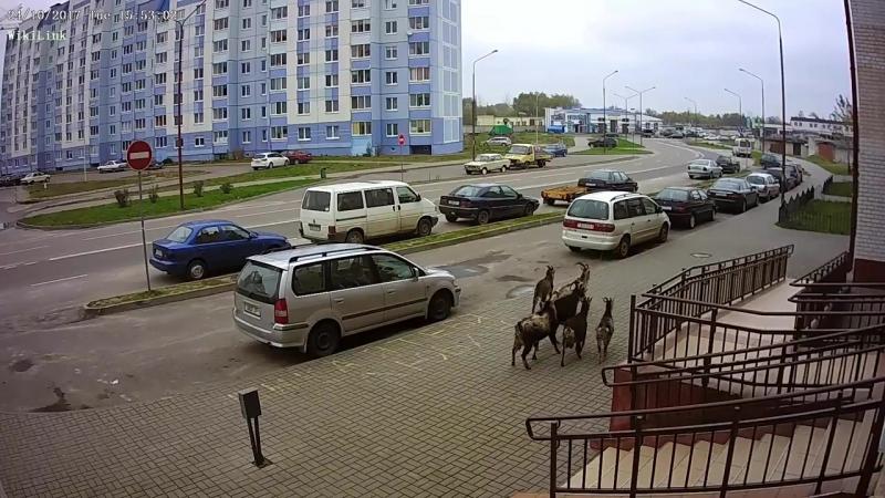 Болельщики ФК Кёльн были замечены в Бресте