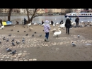 Река Влтава и ее жители