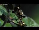 Войны жуков гигантов Monster bug wars 10