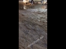 Фонтанирующее дерево в Ставрополе на Доваторцев. 14.01.18