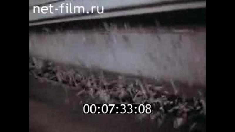 Нить арахны