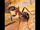 муравьи под микроскопом