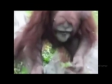 Орангутан спасает птенца