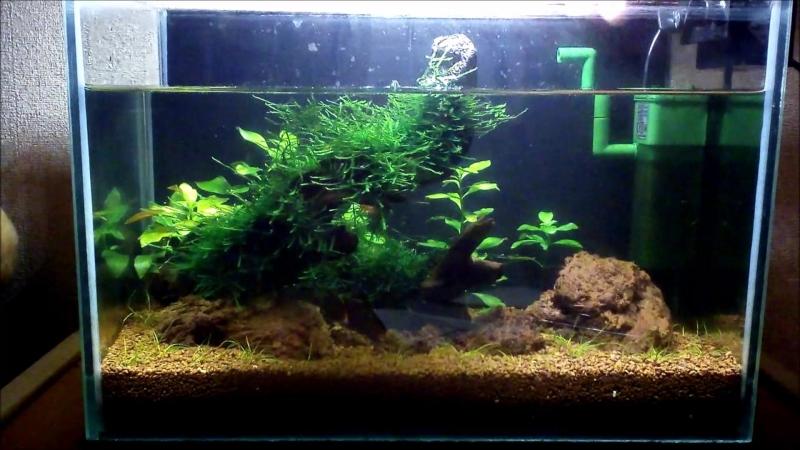 Чистка нано-аквариума с живыми растениями. Креветочник 10 литров